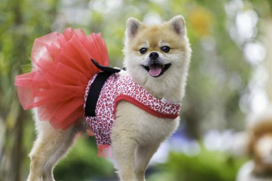 Pet Friendly Stores – NEX Insider
